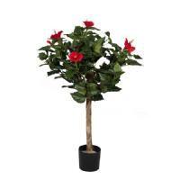 salg af Hawai busk.. r�de blomster, 60 cm.
