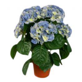 salg af Lyseblå Hortensia, 40 cm. - kunstige blomster