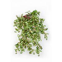 salg af Hoya hængebusk - 54 cm.  - kunstig plante