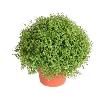 salg af Husfred 20 cm. - kunstig plante - kunstig blomst