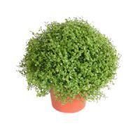 salg af Husfred, 20 cm. - kunstige planter