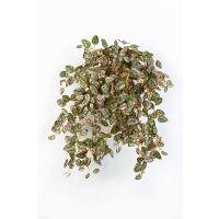 salg af Hypoestes hængebusk - 54 cm. - kunstig plante
