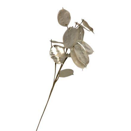 salg af Judas penge, pearl - 75 cm. - kunstig blomst