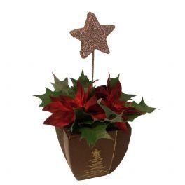salg af Juledekoration med rød julestjerne og guldstjerne