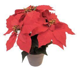 salg af Julestjerne 32 cm., 5 røde blomster