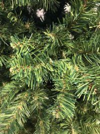 Juletræ 210 cm. med metalfod