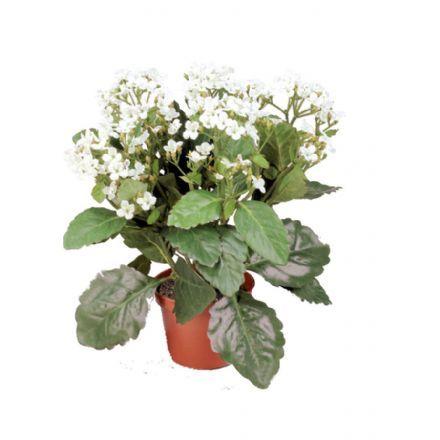 salg af Brændende kærlighed hvid, 30 cm. - kunstig blomst