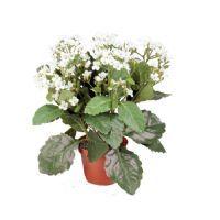 salg af Hvid Brændende kærlighed, 30 cm. - kunstige blomster