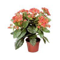 salg af Kalanchoe 30 cm. - Orange - Kunstig blomst