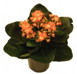 salg af Kalanchoe - orange 25 cm. - kunstige blomster