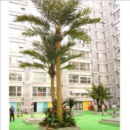 salg af Kokospalme 6 meter høj