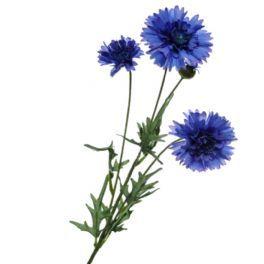 salg af Kornblomst - 56 cm. - kunstige blomster