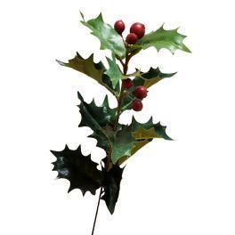 salg af Kristtjørn, grøn med bær, højde 48 cm.