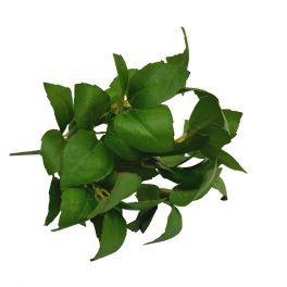salg af Basilikum stilk, frisk grøn - længde 30 cm. - kunstige krydderurter