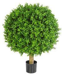 Buksbom planter