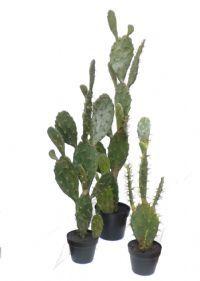 Sukkulent, kaktus og agave