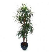 Træer og palmer