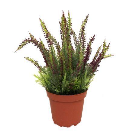 salg af Lyng, Lilla - 25 cm. - kunstige blomster