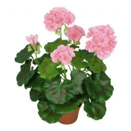 salg af Lyserød Pelargonie, 35 cm. - kunstige blomster