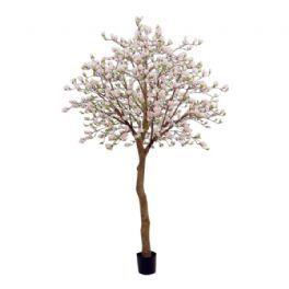 salg af Magnolia træ, 350 cm.