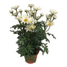salg af Margurit hvid, 30 cm - kunstig blomst