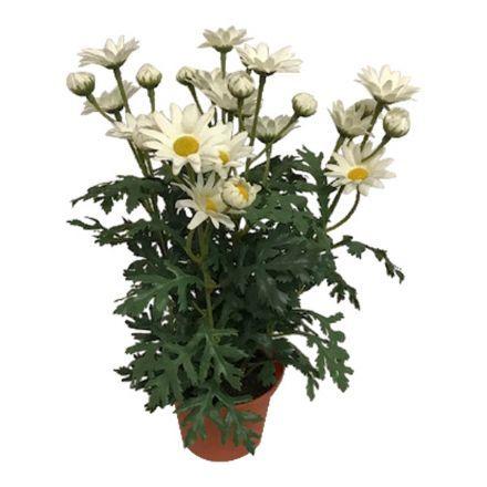 salg af Hvid Margurit, 30 cm. - kunstige blomster