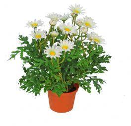 salg af Margurit 24 cm. - hvid - kunstige blomster