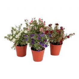 salg af Hvid Mini blomst , 14 cm. - kunstige blomster