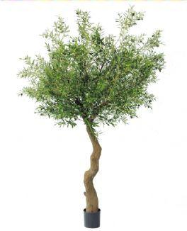 salg af Oliventræ med frugter - højde 240 cm. - Kunstige træer