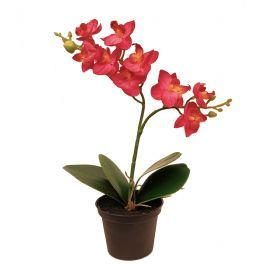 salg af Orkide - 24 cm. - cerise rød - kunstig plante