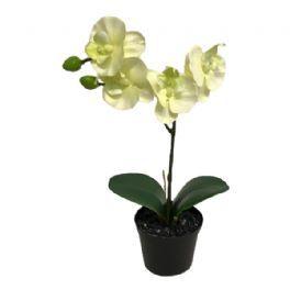 salg af Creme/lime orkide, 27 cm. - kunstige blomster
