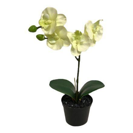 salg af Creme/lime orkide, 30 cm. - kunstige blomster