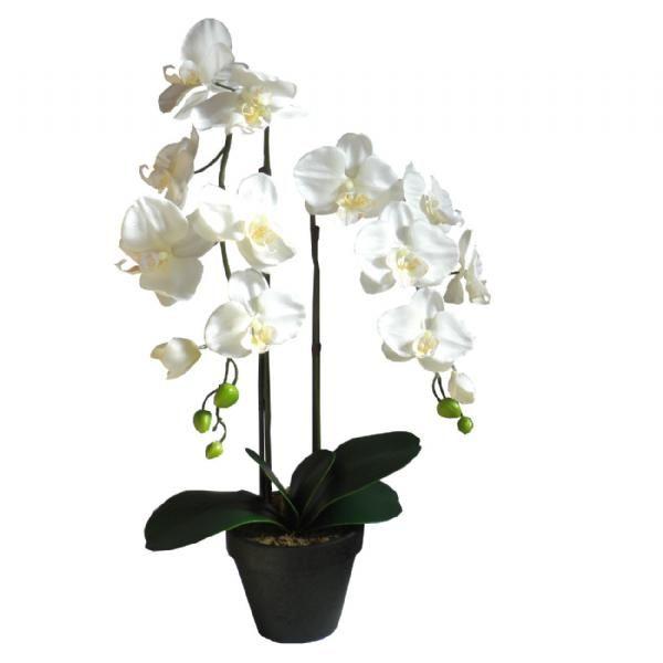 planter online billig