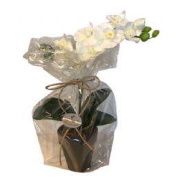 salg af Gaveide, Hvid orkide - H32 cm. - kunstige blomster