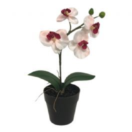 salg af Orkide m/potte H25 cm.