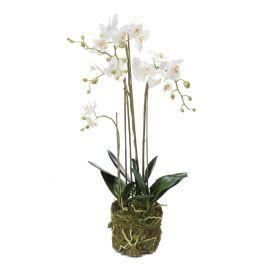 salg af Orkide plante med mos, 80 cm. - hvid