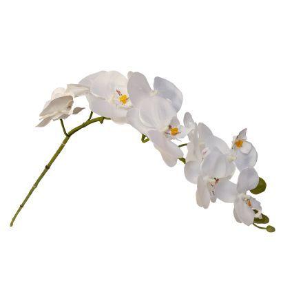 salg af Orkide stilk, hvid, 70 cm.