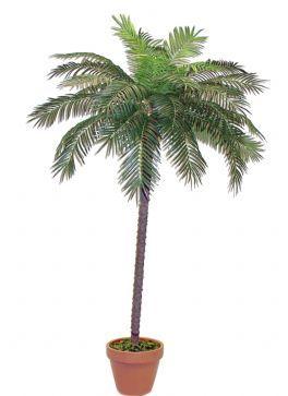 salg af Palme 240 cm.