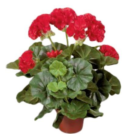 salg af Rød Pelargonie, 35 cm. - kunstige blomster