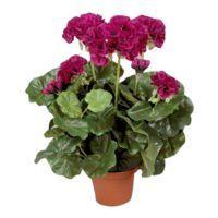 salg af Fuchia Pelargonie, 35 cm. - kunstige blomster