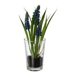 salg af Perle Hyacinth i glas 16 cm