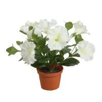 salg af Hvid Petunia, 25 cm. - kunstige blomster