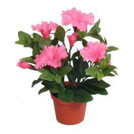 salg af Petunia - lys rød - højde 25 cm.