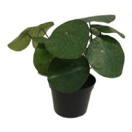 salg af Pilea, 23 cm. - kunstige planter