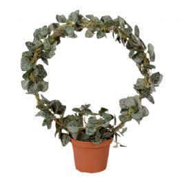 salg af Hjerteranke på bøjle,30 cm. - kunstige planter