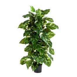 salg af Pothos på stamme, Højde 120 cm. - kunstig plante