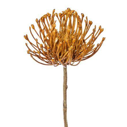 salg af Protea, terracotta - 45 cm. - kunstige blomster