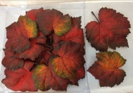 salg af Blade, efterår i æske - kunstige blade