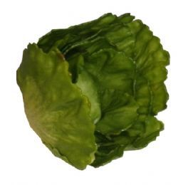 salg af Salat, grøn 15 cm.
