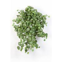 salg af Saxifraga hængebusk 54 cm. - kunstig plante